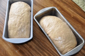 Whole-Wheat Bread Made with Hard-Wheat Flour After Second Rising
