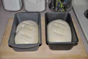 Basic Home-Style Bread After Second Rising
