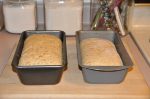 Cracked-Wheat Bread After Second Rising