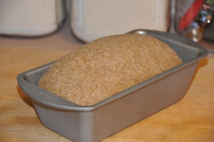 Pumpernickel Bread II After Second Rising