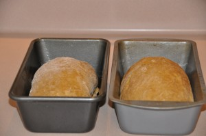 Maryetta's Oatmeal Bread After Second Rising