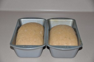 Whole-Wheat Nut Bread After Second Rising