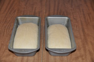 Salt-Rising Bread After Rising